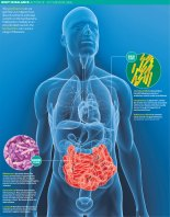 Gut Bacteria graphic